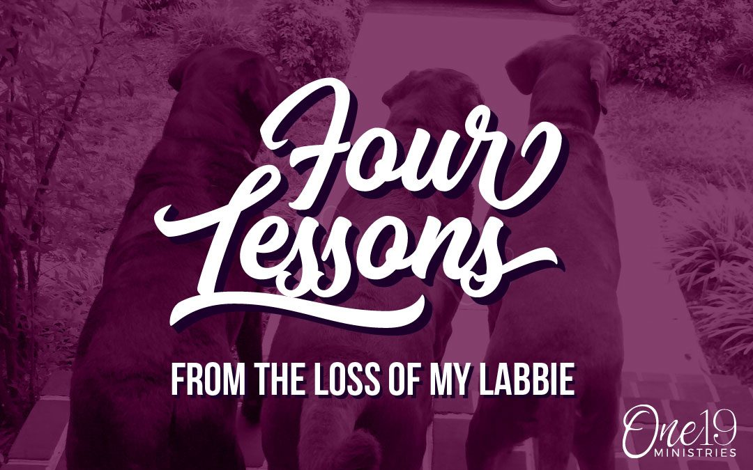 Four Lessons from the Loss of my Labbie